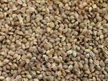Coriander, flax, sainfoin, brewing barley, millet, pea beans