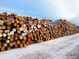 Lumber / Timber from the manufacturer - фото 4
