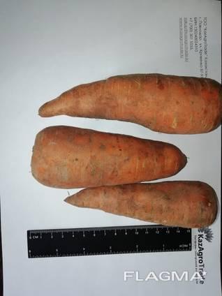 Ich werde Karotten Großhandel Kasachstan verkaufen