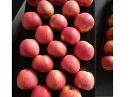 Qinguan Apples